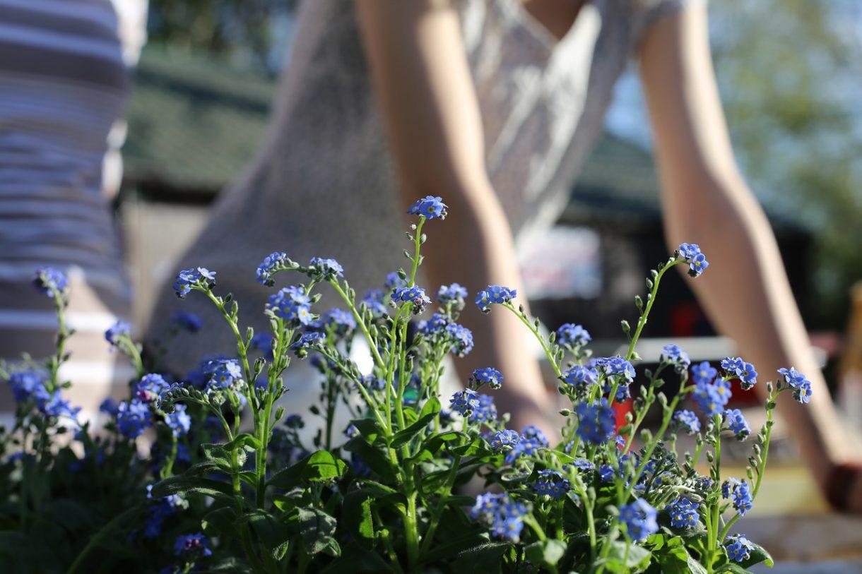 spring-garden-1219823_1280
