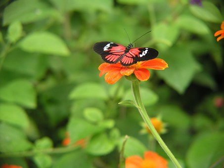 flower-532382__340