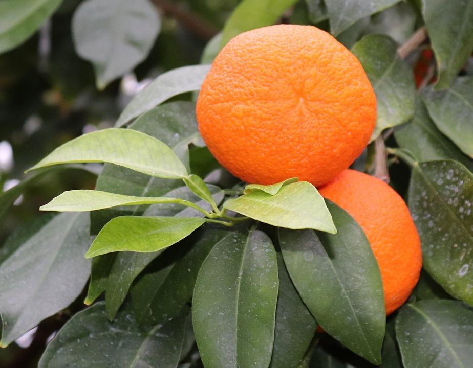 oranges-3101060_960_720